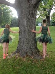 My Woodland Fairies
